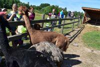 Skaityti daugiau: Pažintinė kelionė po Aukštaitijos nacionalinį parką